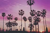 Foto de playa de Miami con palmeras en un atardecer violáceo