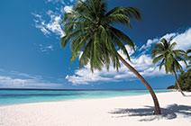 Foto de playa en Punta Cana con plameras