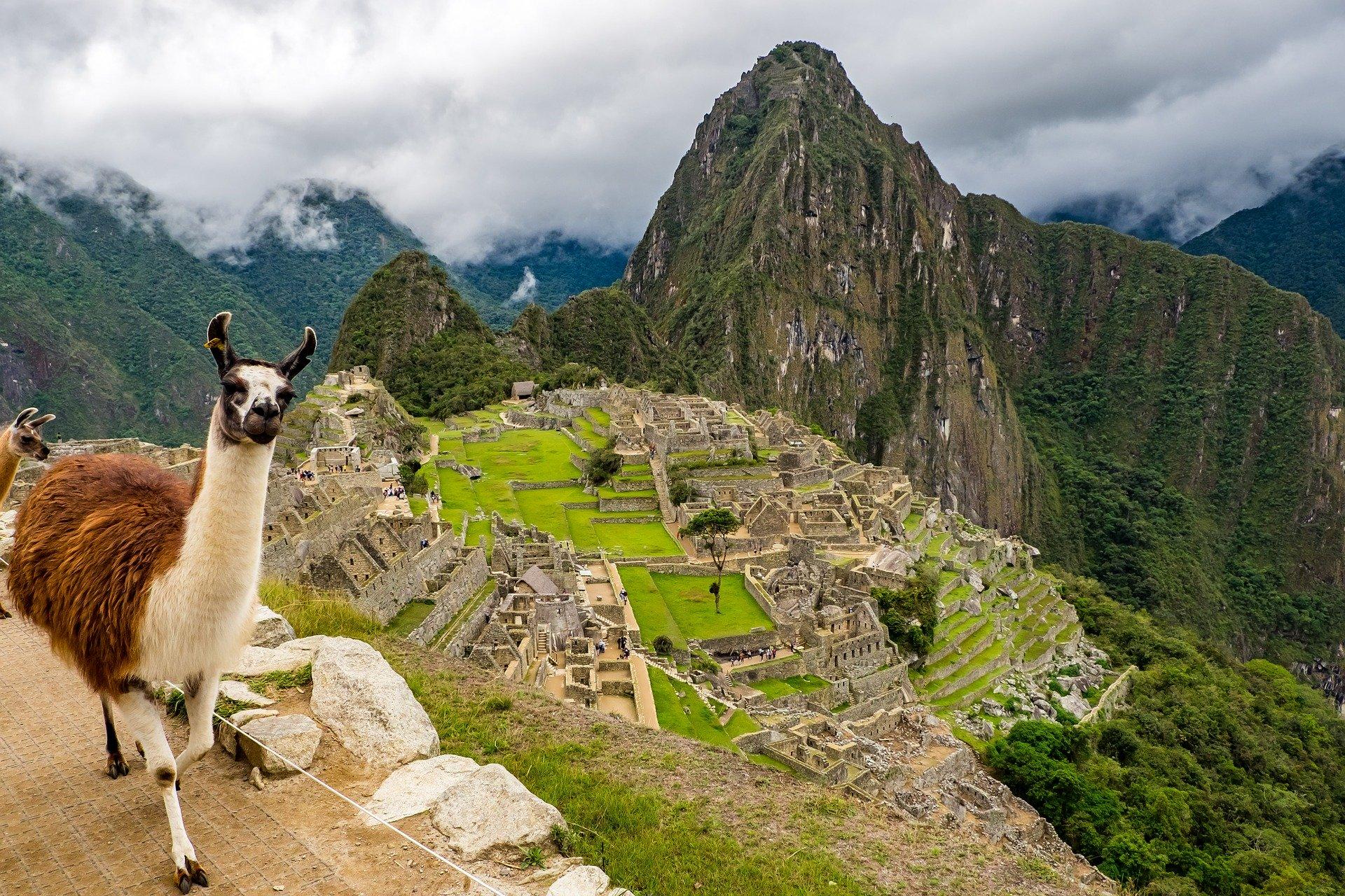 Foto de llama en Machu Picchu, Perú